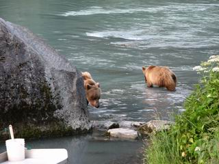Bear and 2 cubs fishing for lunch